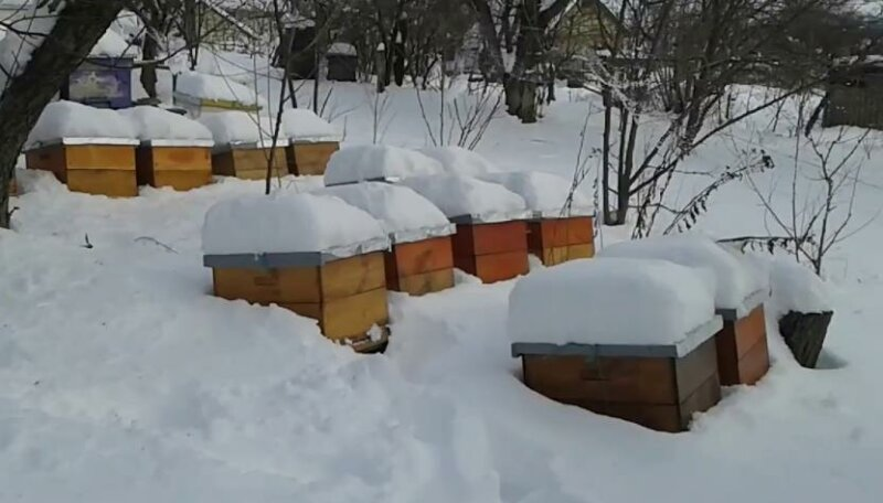 zimovka-pchel-sravnenie-1B3664.jpg