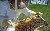 Виды весенних работ с пчелами и методика их проведения на пасеке