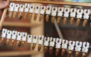 Описание вывода маток в шприцах