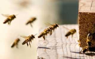 Эффективные методы борьбы с воровством семей пчел