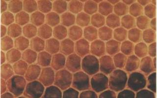 Гнездо пчел, строительство сотов