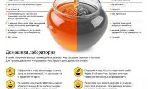 Значение и способы определения качества меда