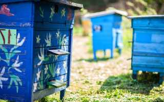 Проблемы и направления развития пчеловодства в Белоруссии