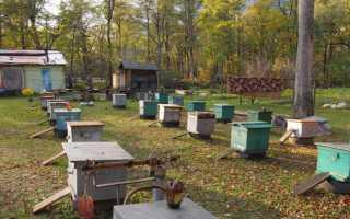 Развитие пчеловодческих хозяйств на Урале