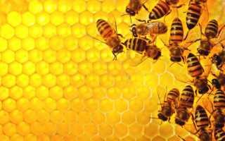 Процесс размножения семьи пчел