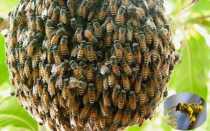 Соблюдение правил содержания пчел