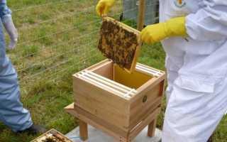 Улей пчелиный: состав, размер, рамки