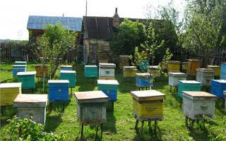 Особенности кочевого пчеловодства