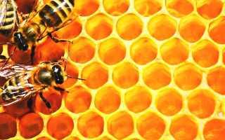 Пчеловодство: количество меда от одного улья