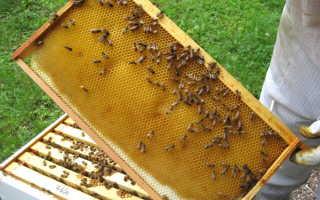 Виды и применение разделительной решетки для пчел в ульях