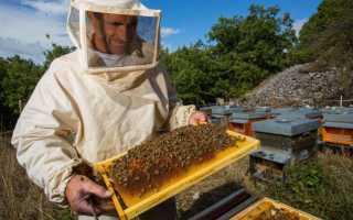 Высокий уровень развития пчеловодства в Украине