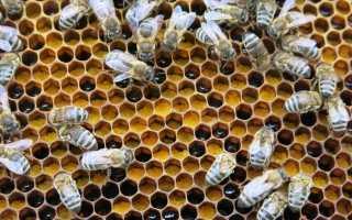 Питание пчел Виды корма