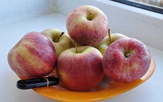 Сорт яблок Гала Описание