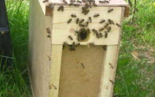 Как правильно пересадить пчел в улей