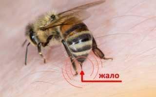 Значение жала для пчел