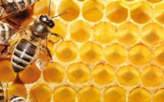Апитерапия медом с маточным молочком и ее полезные свойства