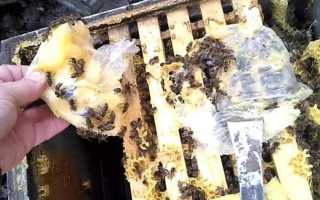 Переселение пчелиной семьи