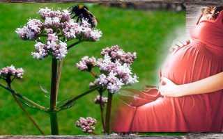 Рекомендации приема настойки валерианы при беременности