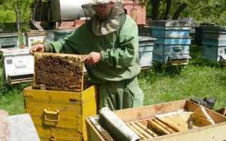 Каким способом сделать пчелиный отводок