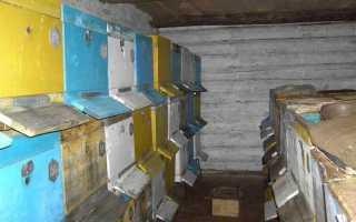 Основные требования к зимовнику для пчел: подсказки и советы пчеловодам