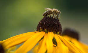 Полезные свойства цветочной пыльцы и применение ее детям