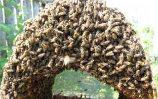 Применение противороевых приемов в пчеловодстве