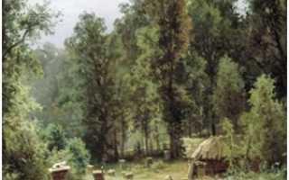 История и современное развитие российского пчеловодства