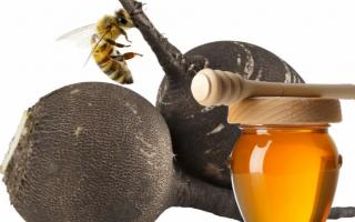 Редька с медом от кашля: помогает ли и как приготовить