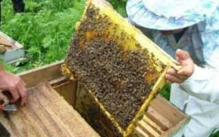 Основные технологии в современном пчеловодстве