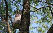 Надежные ловушки для роев пчел