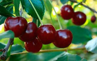 Мероприятия проводимые для посадки вишни