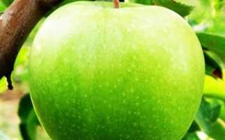 Сорт яблок Гренни Смит – история и особенности