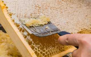 Как правильно откачать мед: инвентарь, извлечение, польза