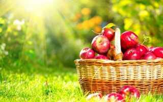 Особенности яблони Звездочка. Описание и фото сорта