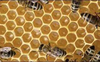 Строение и польза пчелиных сот