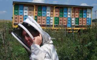 Виды и чертежи павильонов для пчел