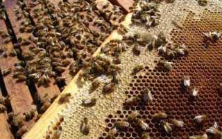 Биологические особенности и характеристики пчелиной семьи