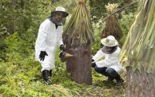 Развитие пчеловодства Башкирии