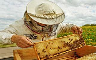 Основные технологии разведения пчел