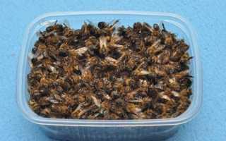 Секреты пчелиного мора