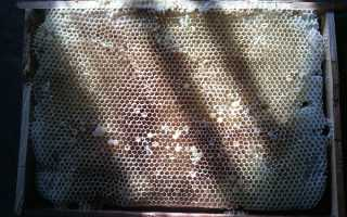 Значение суши для пчел