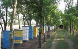 Эффективные методы в пчеловождении