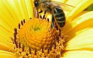 Народные пчелиные приметы