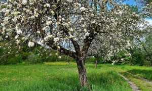 Перечень основных болезней яблонь и способы эффективной борьбы с примерами фото