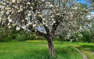 Основные болезни яблонь и способы эффективной борьбы с примерами фото