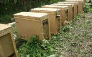 Изготовляем ящик для транспортировки пчел
