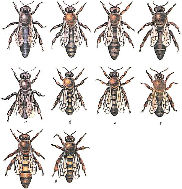Выбираем и закупаем пчел для разведения