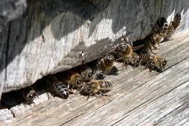 Факторы развития пчеловодства в Украине