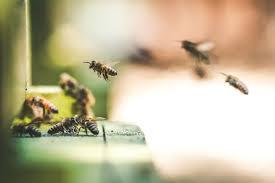 Промышленное пчеловодство мёда