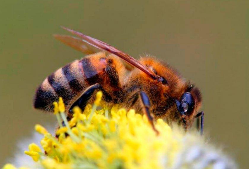 Лечение пчел весной и обработка для профилактики